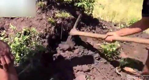 男子野外挖田鼠 挖出的东西吓一跳(组图)