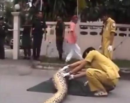 蟒蛇生吞小孩 解剖后惊呆全场人(组图
