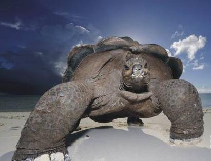 盘点世界十大寿命最长的动物
