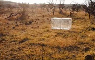 男子把自己装玻璃箱放狮群中 下一幕让他后悔