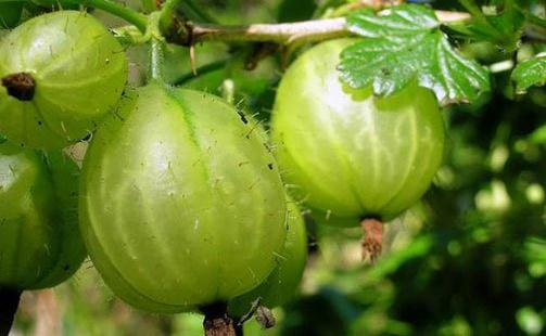 盘点世界上25种最奇葩的水果 你见过多少种呢