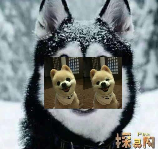 微笑狗恐怖图片:微笑狗事件原图与真相