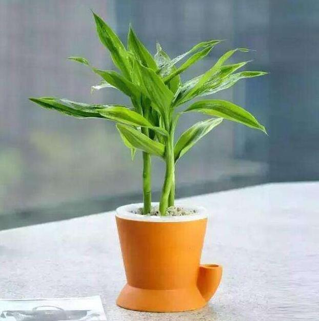 最旺宅的植物大全