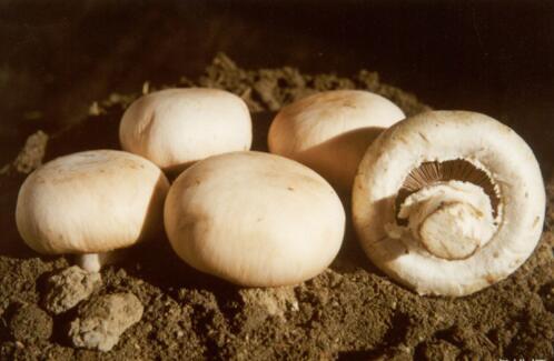 吃什么美白皮肤最有效,美白食物排行榜前10名