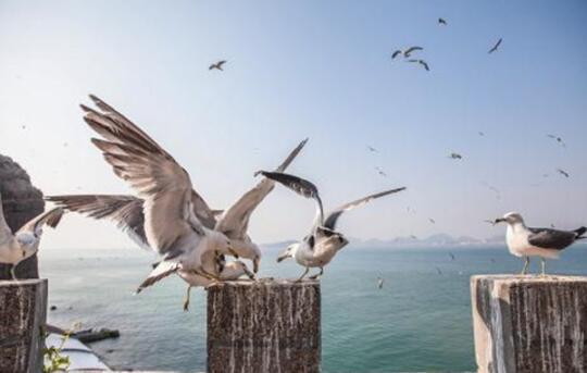 威海旅游攻略大全:威海最值得去的十大景点排名