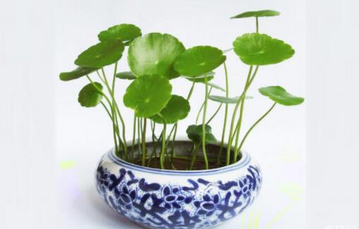 招财又旺宅的十种植物排名,发财树最受欢迎