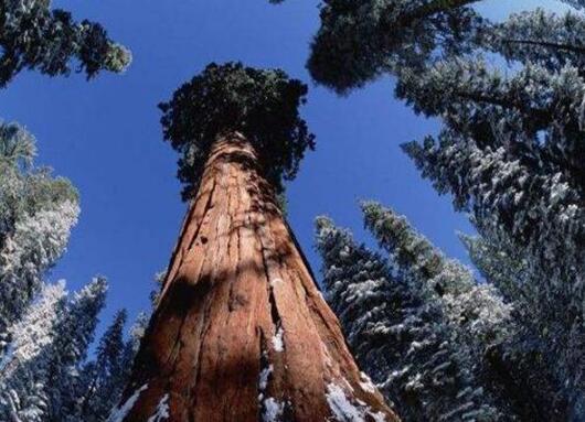 世界十大最美丽的森林盘点,第四被誉为地球之肺