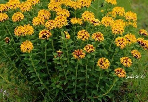 野外求生必备,野外十大常见有毒植物排行榜
