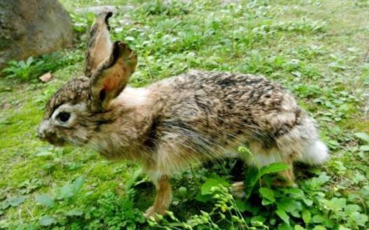 中国十大野生动物自然景区排名,广州长隆排第一