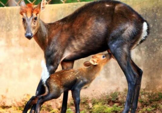 中國十大野生動物自然景區排名,廣州長隆排第一