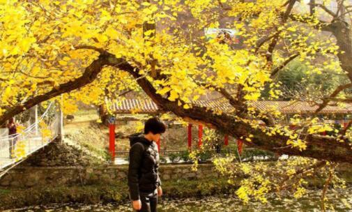南阳必去旅游景点排名前十,第一个被誉为天然的物种宝库
