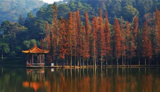 佛山最好玩的十大景点推荐,逢简水乡有广东周庄的美誉