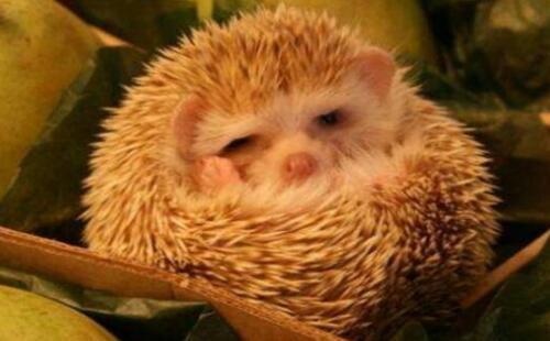 人类为何不能像动物一样冬眠?盘点十种动物冬眠的方式