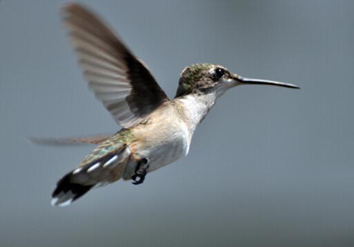 世界上十大鸟类排行榜,第九名被誉为森林女神