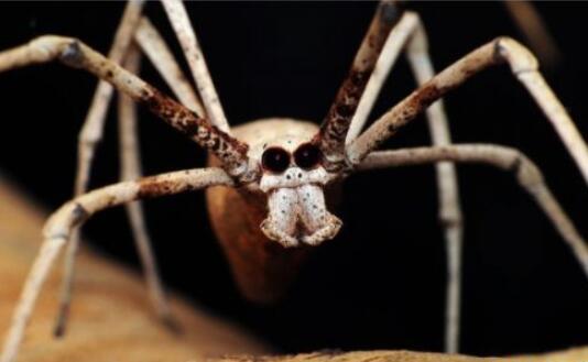 世界十大最致命昆虫排行榜,狼蛛鹰杀伤力最强