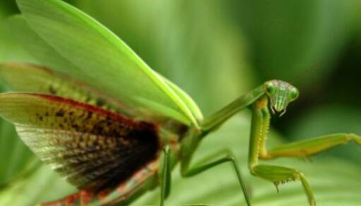 世界十大最致命昆蟲排行榜,狼蛛鷹殺傷力最強
