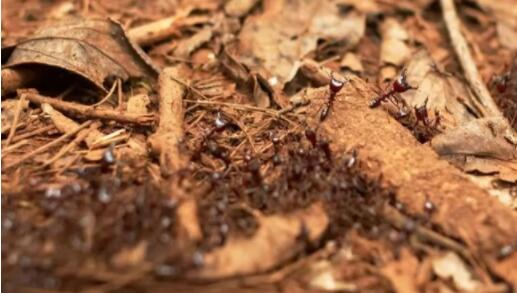 地球上最危险的十大昆虫物种,第一名每年有数百万人死亡