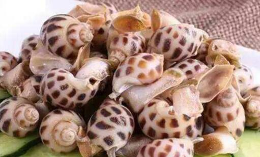 花螺哪些人不能吃?盘点十大最美味的可食用螺