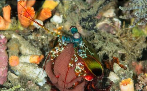 盘点世界上最浪漫的10种动物,狼鳗鱼用生命诠释爱情