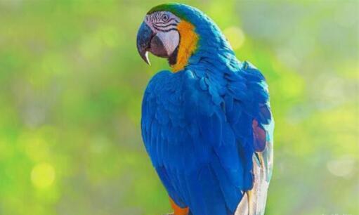 盤點世界上壽命最長的十種鳥,第一種壽命可達80歲