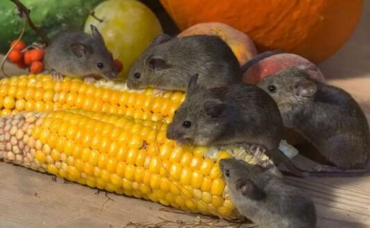 盤點世界上壽命最短的十種動物,蜉蝣只有一天的壽命