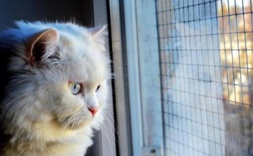 十種最適合家養的貓排名,第一名竟是這種貓(圖)