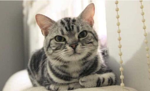 十种最适合家养的猫排名,第一名竟是这种猫(图)