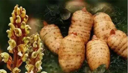 貴州畢節著名土特產品排行榜,威寧火腿聞名海內外