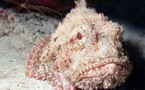 世界最毒的十种动物排行榜,石头鱼位居榜首(图)