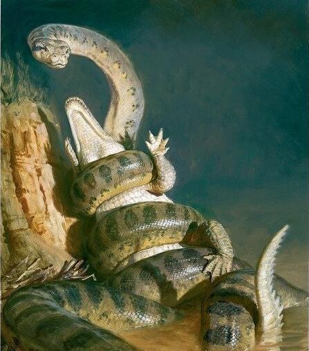 世界上最大的蛇盘点:中国发现长达55米巨蛇