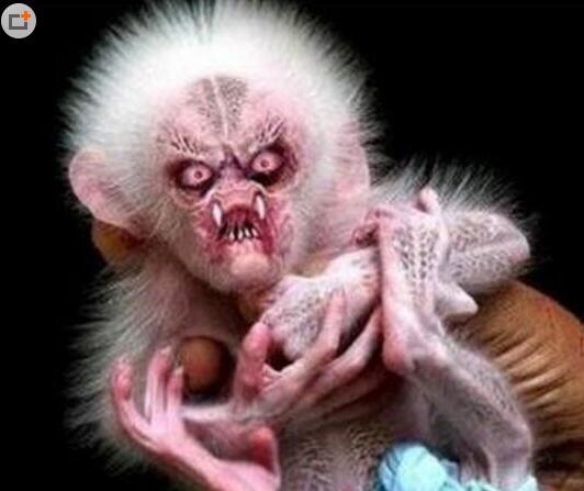 水猴子真的存在吗?水猴子图片看着好吓人(组图)