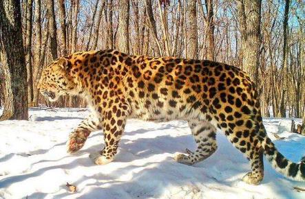 中華穿山甲功能性滅絕,盤點十大將要滅絕的動物