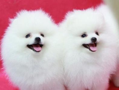 适合女生又好养的宠物狗,十大小型宠物狗品种排名