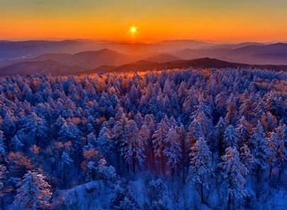 全国各省份森林覆盖率前十排名,哪个省份能排第一