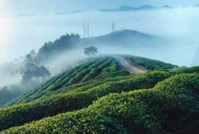 中国著名茶叶品牌有哪些,中国十大茶叶品牌排行榜