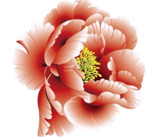 中國國花之爭:中國的國花是什么,國花民意調查出爐