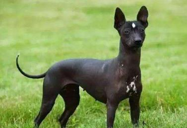 什么狗最干净最好养,十种最好养狗狗品种排行榜