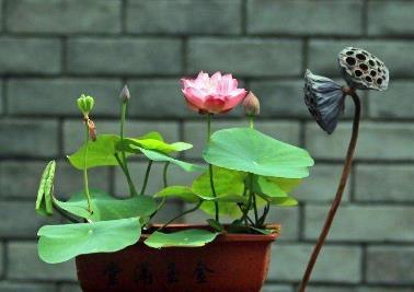 常见的家养花种类_适合家养的花的种类:十种家庭常养花卉品种排行-参考之家