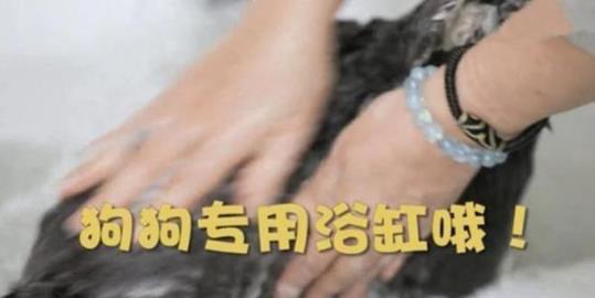 周海媚曬上億豪宅內景曝光,寵物狗享有專用浴室房間