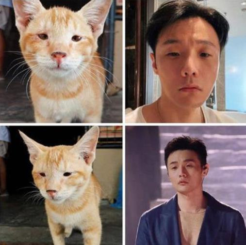 杨丞琳认证李荣浩撞脸猫咪,网友调侃自己的老公自己黑