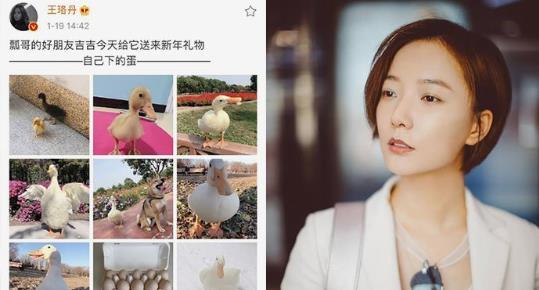 王珞丹寻鸭启事最新进展:吉吉已经不在这个世界了